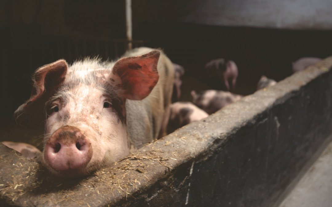 """Lessons from the fable of """"The Three Little Pigs"""" to be a better entrepreneur"""
